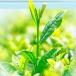 茶葉のイメージ